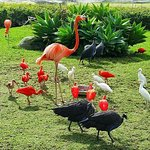 Photo of Birds of Eden