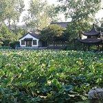 Photo of Xuanwu lake