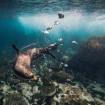Underwater Safaris照片