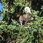 Photo of Chilkat Bald Eagle Preserve