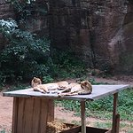 صورة فوتوغرافية لـ Nuremberg Zoo