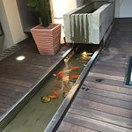 Charming fish tank at Tri Stoleti