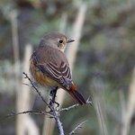 Calidris Vogelsafari's Foto