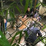 Photo de Tiger Kingdom Chiang Mai