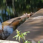 Foto de Ellie Schiller Homosassa Springs Wildlife State Park