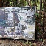 Kanneliya Forest Resort Foto