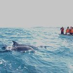 Dolphin tour. The tour doesn't only allow you to see the dolphins but also to swim with them