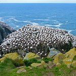 Foto Cape St. Mary's Ecological Reserve