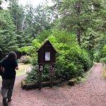 Bild från Jessie M. Honeyman Memorial State Park