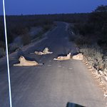 Foto van Game drives at Phalaborwa Gate in Kruger National Park
