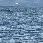 Hebridean Whale Cruises의 사진