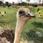 صورة فوتوغرافية لـ Dubai Safari