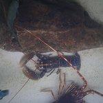 Фотография Lyme Regis Marine Aquarium