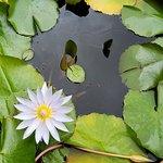 アラートン ガーデンの写真