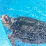 Projeto Tartarugas Marinhas (Tamar)