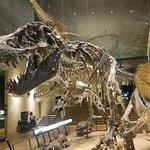 Kitakyushu Museum of Natural History & Human History