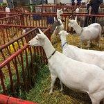 Kentucky Fair and Exposition Center照片