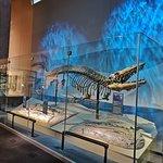 Foto van Perot Museum of Nature and Science