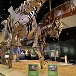 Photo of Perot Museum of Nature and Science