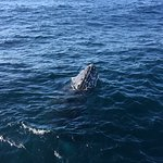 Oz Whale Watching의 사진