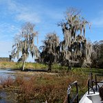 Foto de Airboat In Everglades