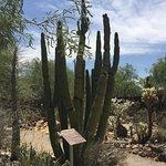 Botanische Gärten von Tucson Foto