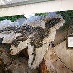 Photo of Sito Paleontologico Dinosauro Antonio
