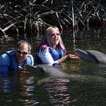 Dolphins Plus Baysideの写真
