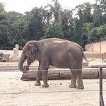 Erlebnis-Zoo Hannover Foto