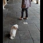 Фотография Пешеходные экскурсии с индивидуальным гидом - DiscoveringVenice