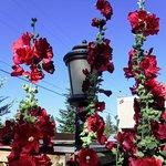 Rancho Viejo의 사진