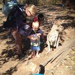 Foto de Lone Pine Koala Sanctuary