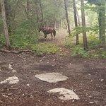 ภาพถ่ายของ Wildwood Outdoor Adventure Park