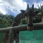 Billede af Zoologico de Vallarta