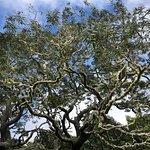 Photo de Hawaiian Legacy Tours