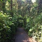 Billede af Santa Elena Cloud Forest Reserve