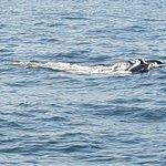 ภาพถ่ายของ Whale Watching Danushka