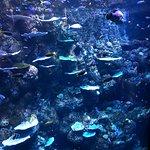 Photo of Cairns Aquarium
