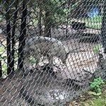 Billede af Lee G. Simmons Conservation Park and Wildlife Safari