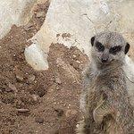 Bild från Natureland Seal Sanctuary