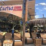 Photo of Blue Cactus