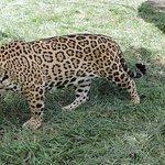 La hacienda cuenta con un enorme zoológico, en el que podrás ver animales sorprendentes.