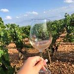 Bilde fra Mallorca Wine Tours