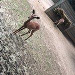 Photo of Barcelona Zoo