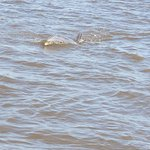 Jekyll Island ​Dolphin Tours Photo