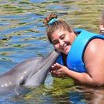 Delphinus Puerto Morelos resmi