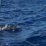 صورة فوتوغرافية لـ Scotch Mist Sailing Charters