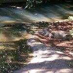 Foto de Bela Vista Ecological Refuge