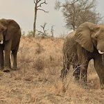 Elephant Herd Tours & Safaris 이미지