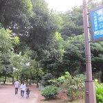 Foto di Kiyosumi Park